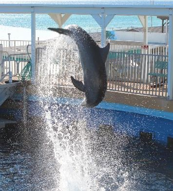 gulfarium fort walton beach fl